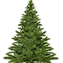 christmas-tree-1792267_640(1)